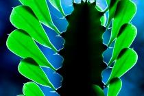 Papier_Platz_4._E_Baumberger_A4_Kaktus_im_Licht.jpg