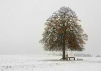 2.Platz-C2_MR027_Baum-im-Schnee